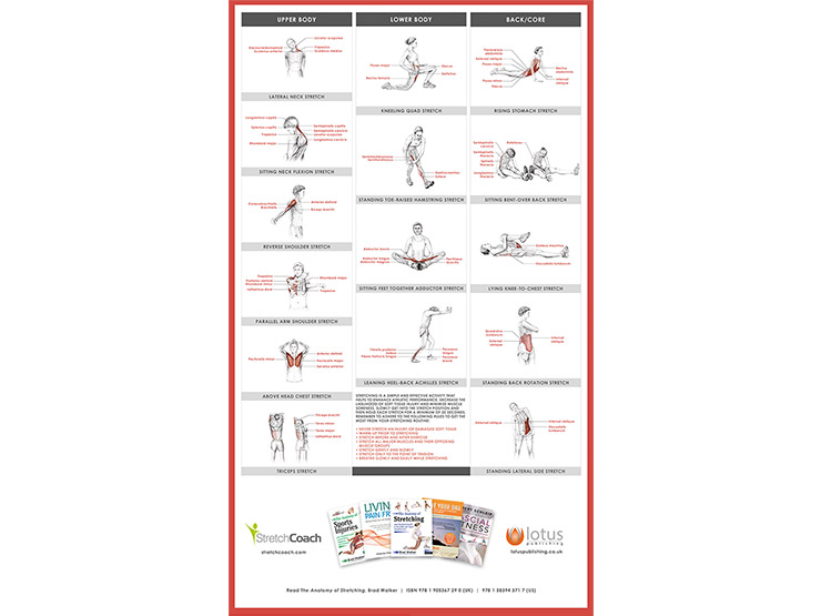 Anatomy of Stretching Poster