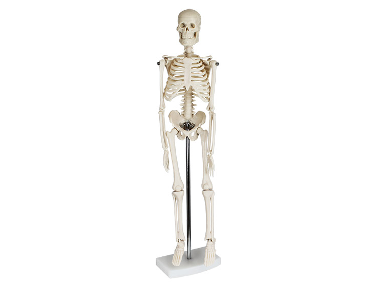 Mini Skeleton 40cm Tall