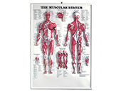 Wallcharts & Posters