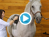 Elite and Equine Pro Thumper Massager Video